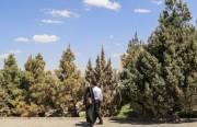 جمهوري اسلامي ايران، دگرگونی در نوع ارزش های رابطه بین زن مرد، ارزش های خانواده ها و چالش های اجتماعی