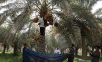 حكومة بايدن تحقِّق في قضية تمويل قطر الحرس الثوري الإيراني.. و12.6 ترليون تومان خسائر الزراعة في الأحواز بسبب الجفاف
