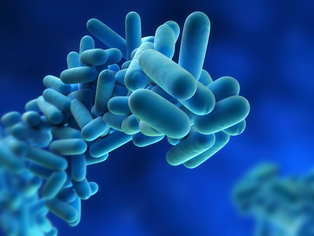 Plastik-Yiyen-Bakteri-00