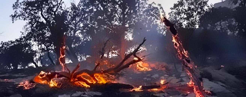 2015828214317935641441_مرتفعات-شاهو-الحريق-يلتهم-غاباتها-ومراتعها-الطبيعية